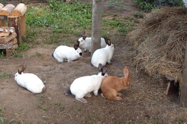 Бизнес план – кролиководство в рамках РФ