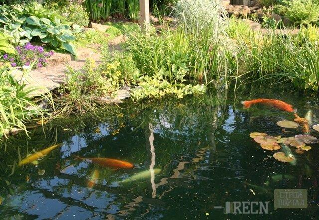 Как построить пруд для разведения рыбы: 4 способа