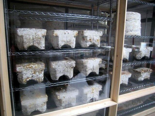 Выращивание шампиньонов как прибыльный бизнес: поэтапно