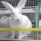 Как разводить кроликов: особенности + советы для начинающих